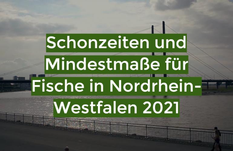 Schonzeiten und Mindestmaße für Fische in Nordrhein-Westfalen 2021